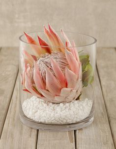Buy King Protea In Short Cylinder Vase online – NETFLORIST