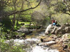 Rutás fáciles con carrito de bebés por la Comunidad de Madrid San Mamés, Cattle Grid, Tiny Log Cabins, Birches, Natural Swimming Pools, Baby Buggy, Paths