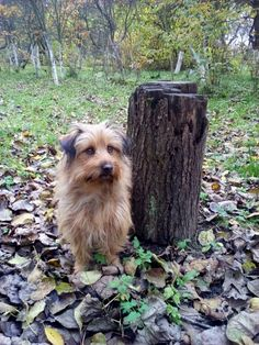 autor: jlez, Poland (tytuł: Natura 9011 - jesień, sad, liście i pies)