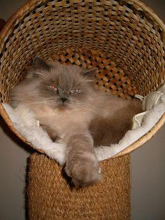 Gatos en casa: Árbol rascador de sisal con una cesta de mimbre de Ikea