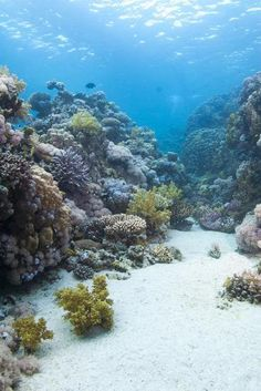 Coral Reef Scene Close to the Ocean Surface, Ras Mohammed Nat'l Pk, Off Sharm El Sheikh, Egypt-Mark Doherty-Photographic Print Underwater City, Underwater Creatures, Under The Ocean, Sea And Ocean, Beautiful Ocean, Amazing Nature, Coral Reef Drawing, Beyond The Sea, Underwater Photography