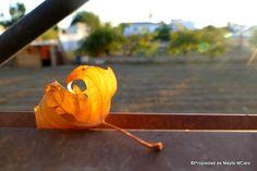 .Tan, tan ¿Quén es?  Tan, tan.  ¿Quién es?  El Otoño otra vez.  ¿Qué quiere el Otoño?  El frescor de tu sien.  No te lo quiero dar.  Yo te lo quiero quitar.  Tan, tan.  ¿Quién es?  El Otoño otra vez.  #FedericoGarcíaLorca #Granada #Otoño #Hojas #Poesía #Fotográfia #SafeCreative