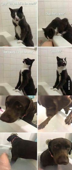 cats vs dogs when it comes to water
