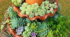 Las suculentas son una excelente opción para realizar hermosas composiciones en el jardín o en macetas. Se trata de especies que son abundantes, que crecen lentamente y vienen en una gran variedad de colores, tamaños y texturas por lo que se pueden lograr acabados de composición muy buenos. La variación de color de las suculentas ... Ikebana, Patio Plants, Cactus Y Suculentas, Arte Floral, Plant Decor, Planting Succulents, Landscape, Gardening, Fairy