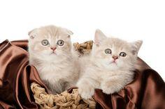 Das richtige Katzenkörbchen für die Katze mit Stil - http://www.transportbox-katzen.de/das-richtige-katzenkoerbchen-fuer-die-katze-mit-stil/