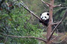 Bilder des Tages: Chengdu, Provinz Sichuan, China, von