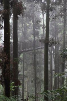 """Skywalk in Heavy Mist"" ~ Photography by S Tu, via Flickr."