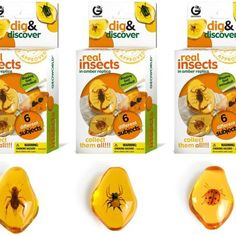 Dig & Discover Real Insects Excavation Kit $6.99  Description Real Insects Dig and Discover Live the experience of being a real paleontologist, digging and discovering a real insect encased in an amber replica with the help of the chisel! Collect them all! A must-have collection for any young entomologist (study of insects). STEM Recommended for ages 6+