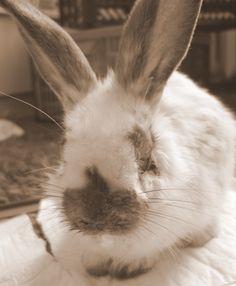 Jak wychować szczęśliwego psa: Jak pomóc porzuconym królikom