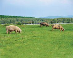 How to Render Lard - Animals - GRIT Magazine