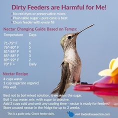 Easiest Nectar Recipe – no cooling time! Get ready for tiny sprites and vow to m… Easiest Nectar Recipe – no cooling time! Get ready for tiny sprites and vow to make your own nectar this year. Keep hummingbirds safe & healthy with fresh nectar! Hummingbird Garden, Hummingbird Flowers, Hummingbird Meaning, Hummingbird Nests, Hummingbird Photos, Hummingbird Tattoo, Humming Bird Feeders, Humming Birds, Diy Bird Feeder