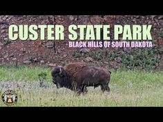 PIC Custer State Park is 71,000 acres in size,  and is located in the Black Hills of southwestern South Dakota. In the video below, we show you all the sights a