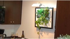 The Wall Garden is Living Art - Kickstarter