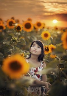 Sunflower field - Magic sunset in the sunflower field. If you like my work i will be happy to follow me. Have a wonderful and peaceful day folks! Sunflower Fields, Folk, Sunset, Photography, Magic, Happy, Sunsets, Photograph, Popular