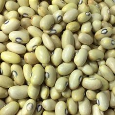 Our open-pollinated Hutterite Soup Bean seeds are guaranteed to be free from any GMO contamination and of the highest quality available. Bean Varieties, Soup Beans, Bean Seeds, Edible Garden, Black Eyed Peas, Dream Garden, Permaculture, Harvest, Grains