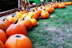 Let's Play OC!: Irvine Park Railroad's 2013 Pumpkin Patch (9/21-10/31)   @Irvine Park Railroad #PumpkinPatch #IrvineParkRailroad #Halloween #OCParks