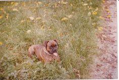 Connie 1978