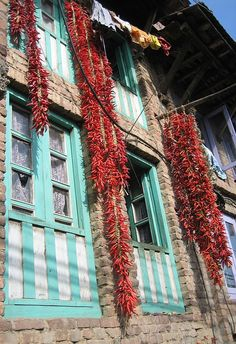 Drying chilies . Nepal