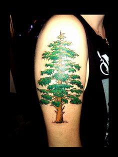 Evergreen tree tattoo by Audrey Mello