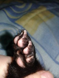 Ferret paws are so cute Pet Ferret, Pets