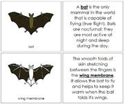 Bat Nomenclature Book