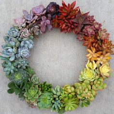 Rainbow Succulent Wreath--inspiration for Stampin up succulents dies Succulent Display, Succulent Wreath, Succulent Arrangements, Colorful Succulents, Growing Succulents, Cactus Planta, Cactus Y Suculentas, Succulent Gardening, Planting Succulents