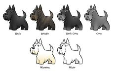 This is a fantastic chart that shows all the different colors a Scottish Terrier can be. (Mine is a wheaten.)