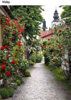 Wonderful alley of roses in the medieval town of Visby, Gotland, Sweden. Amazing to me that Mormor grew up on that island. Places Around The World, The Places Youll Go, Places To See, Around The Worlds, Vila Medieval, Medieval Town, Beautiful World, Beautiful Gardens, Beautiful Places