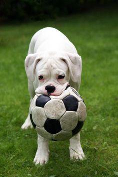 boxer ball anyone??!