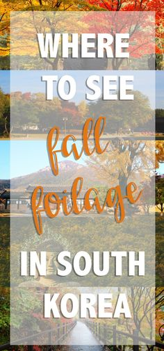 Korea shines best in autumn. I asked some bloggers what they thought were the best places to see fall foliage around the country. Here's our list.