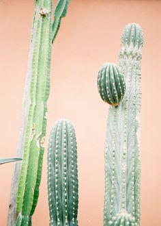 "Travel photography ""Botanical cactus II""   DOWNLOAD   Downloadable Printable photo art print   Modern Wall art   Pastel   http://etsy.me/2FPpGcB #kunst #fotografie #oranje #groen #photoprint #photo #"