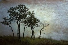 Tree Photograph  Night Print  Michigan by judeMcConkeyPhotos, $45.00