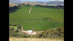 Fazenda a venda 206 ha.agronegocio- Café colheita mecanizada/MG