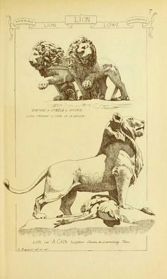 Materials and documents of architecture and sculpture : classified alphabetically Animal Sketches, Animal Drawings, Art Drawings, Environment Sketch, Lion Art, Gravure, Illustrations, Painting & Drawing, Art History