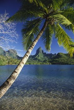 One of the most magic places I have been lucky enough to see in person. <3 French Polynesia - Moorea