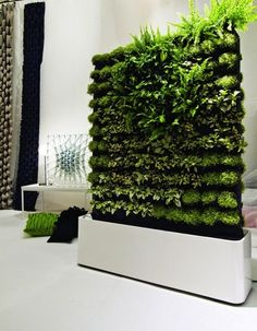 vertical-garden for indoor
