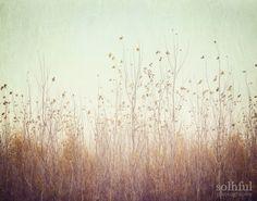 Dreamy Soft Autumn Trees Reaching the Aqua Sky, 8x10