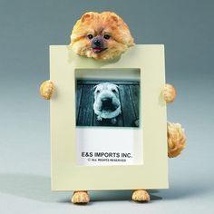 Pomeranian Picture Frame