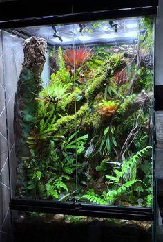 Terrariums Gecko, Terrarium Plants, Reptile Habitat, Reptile Room, Planted Aquarium, Aquarium Fish, Aquariums, Crested Gecko Vivarium, Chameleon Pet