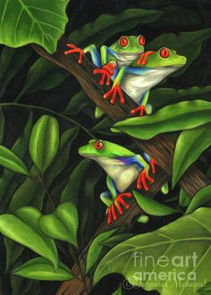 Leap Frog Drawing by Tammara Markegard - Leap Frog Fine Art Prints and Posters for Sale