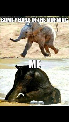 Lustige Tiermemes - Funny animal memes make me laugh - Funny Animal Jokes, Animal Humour, Stupid Funny Memes, Cute Funny Animals, Funny Relatable Memes, Funny Animal Pictures, Funny Photos, Tired Funny, Cute Animal Quotes