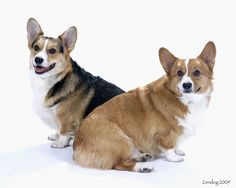 Dex and Lucy copyright 2012 zendog pet portraits