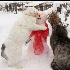 snowman and kittys