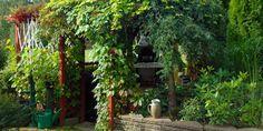 GRØNT TAK: Mange drømmer om en takterrasse dekket av vakre slyng- og klatreplanter.
