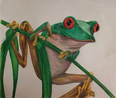 Red-eyed Tree Frog - Colored pencil drawing by M. Perry 2004