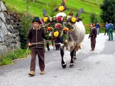 Almabtrieb - Alpine cow parade.  Happens after summer is over.