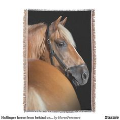Haflinger horse from behind on black background throw blanket Haflinger Horse, Mane N Tail, Photo Memories, Throw Blankets, Country Of Origin, Party Hats, Black Backgrounds, Are You The One, Art Pieces
