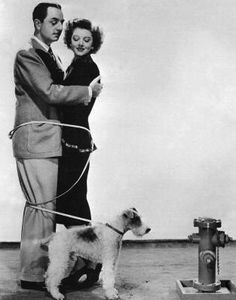 From the Thin Man movies. Asta, the best behaved wire fox terrier in history. Wirehaired Fox Terrier, Welsh Terrier, Terrier Dogs, Fox Terriers, Thin Man Movies, Old Movies, Vintage Movies, Wire Haired Terrier, Wire Fox Terrier