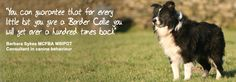 sheepdog experience, dog training and behaviour. Border Collies, Dog Friends, Dog Training, Centre, Spaces, Dogs, Quotes, Pictures, Animals