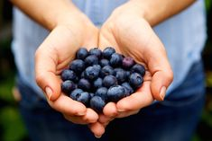 Growing Blueberries, Organic Blueberries, Dried Blueberries, Blueberry Farm, Beachbody Blog, Low Cholesterol Diet, Lose Weight Naturally, Fruits And Veggies, Blueberries